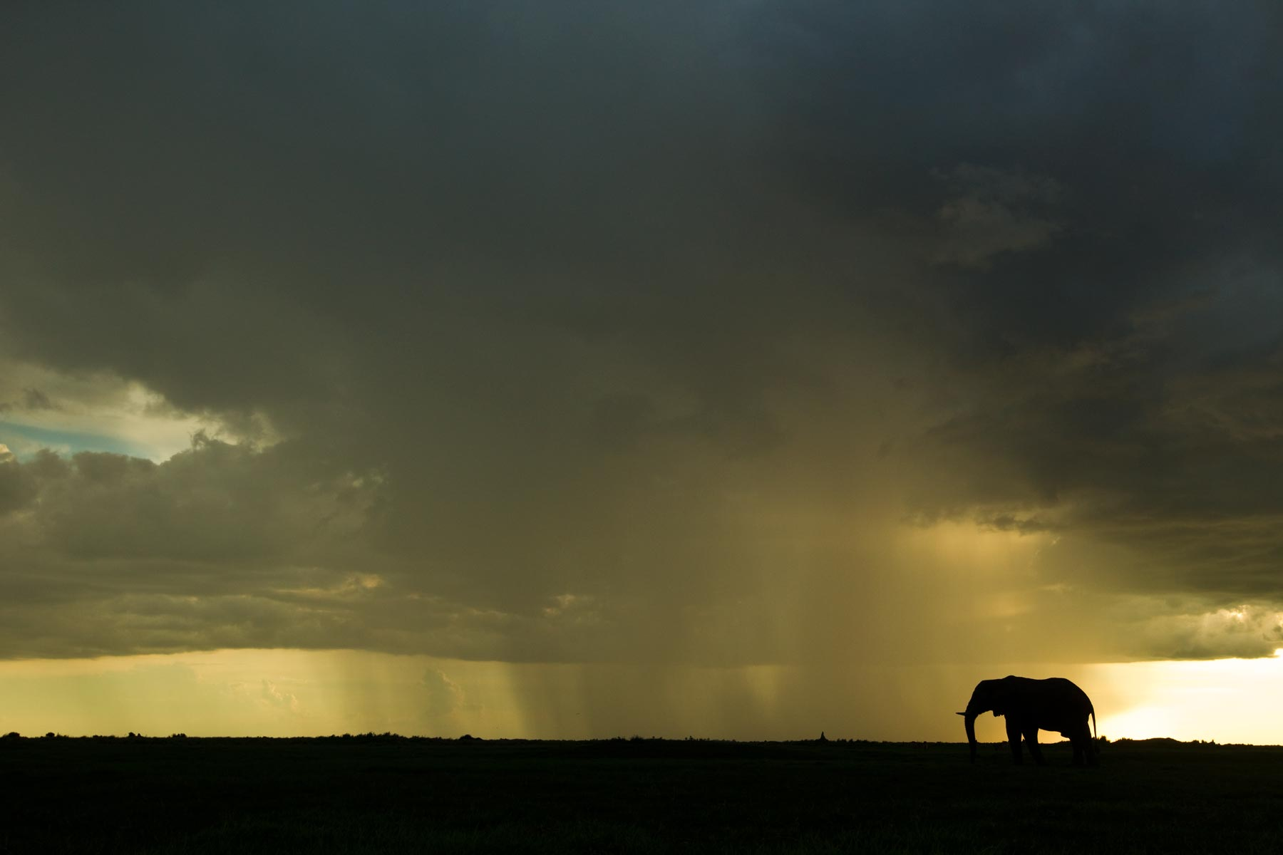 March News – Duba Plains, Botswana