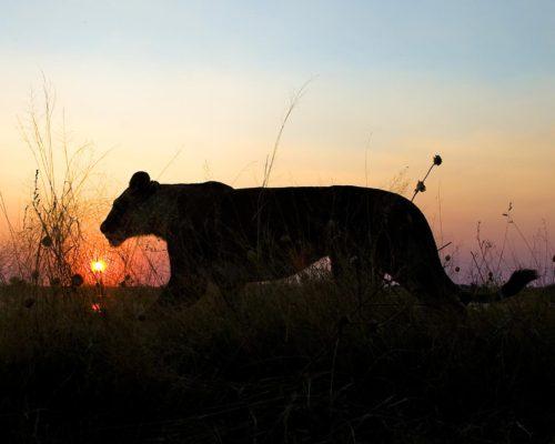 wildlife12