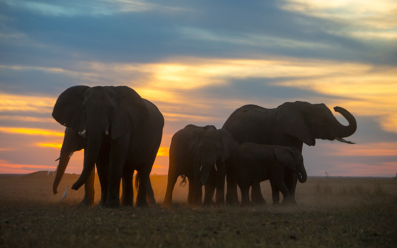 Explore the floodplains of Botswana along side the great Elephants