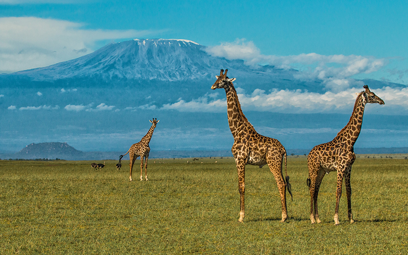 An area rich with wildlife roaming the plains at the foot of Mount Kilimanjaro