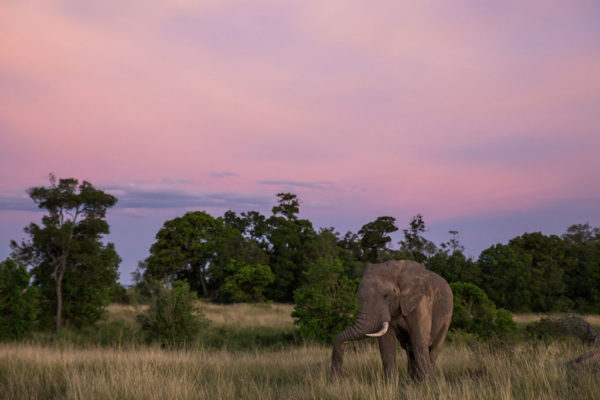 great-plains-conservation-wild-studio-jeremy-goss-12