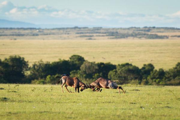 great-plains-conservation-wild-studio-jeremy-goss-8