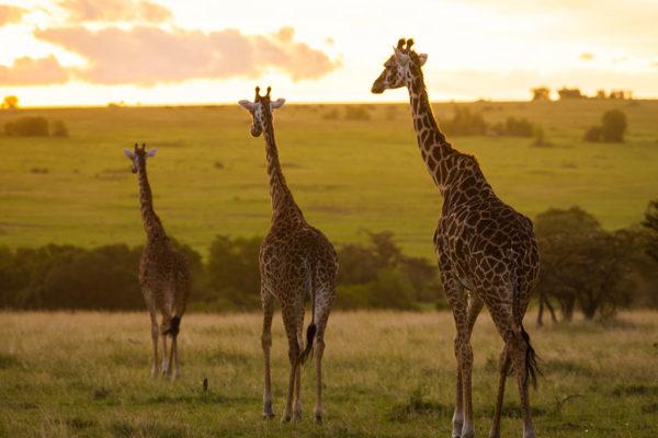 great-plains-conservation-wild-studio-jeremy-goss-9