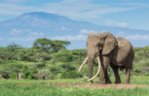 ol Donyo Lodge, Elephant and Kilimanjaro