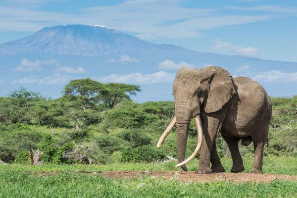 ol Donyo Lodge, Elephant and Kilimanjaro