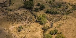 Great Plains Conservation - The Great Migration in Kenya