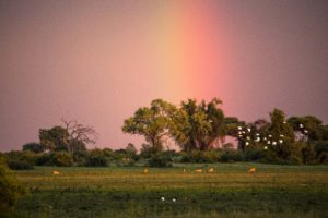 Duba Plains Rainbow season