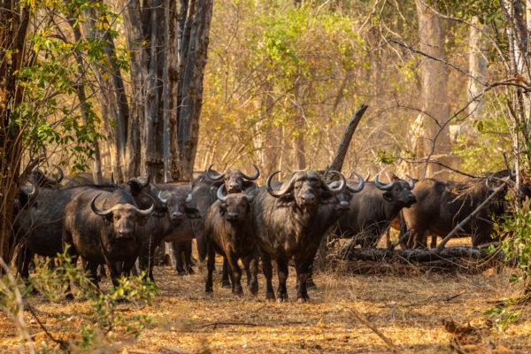 2019-great-plains-sapi-springs-camp-buffalo