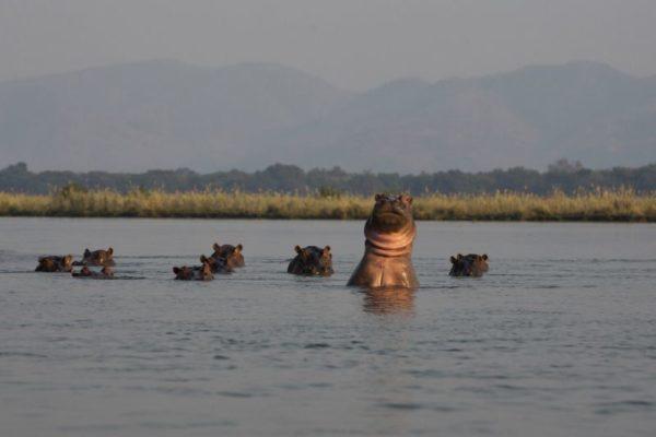 SapiExplorersCamp_SafariAndWildlifeExperience_SapiReserveZimbabwe (2)