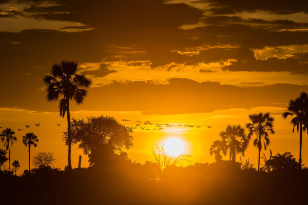 great-plains-conervations-xigera-sunset