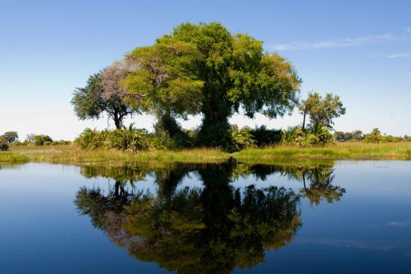 great-plains-conervations-xigera-tree-reflection