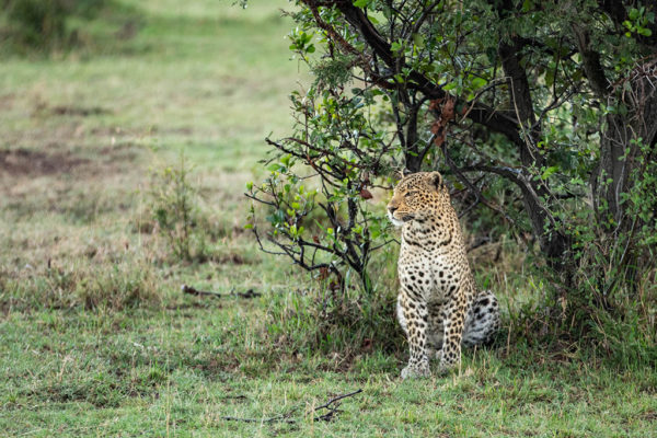 great-plains-conservation-safari-pioneers-mara-nyika-2
