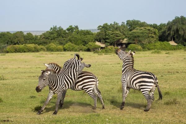 great-plains-conservation-safari-pioneers-mara-plains-5