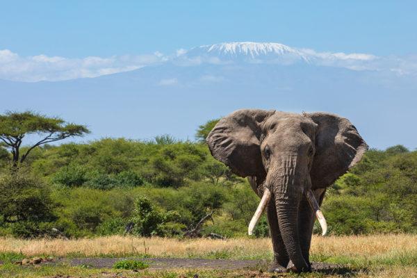 great-plains-conservation-safari-pioneers-ol-donyo-lodge-1