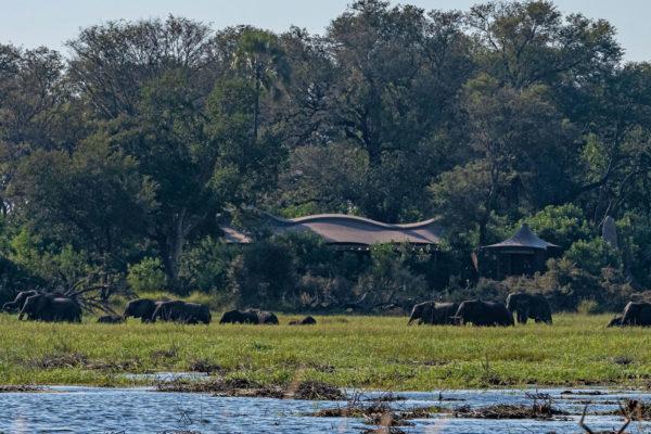 great-plains-conervations-xigera-camp-elephants