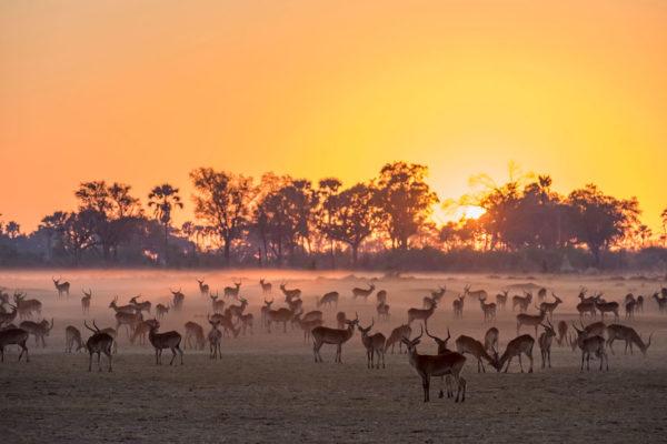 great-plains-conervations-xigera-lechwe-sunrise