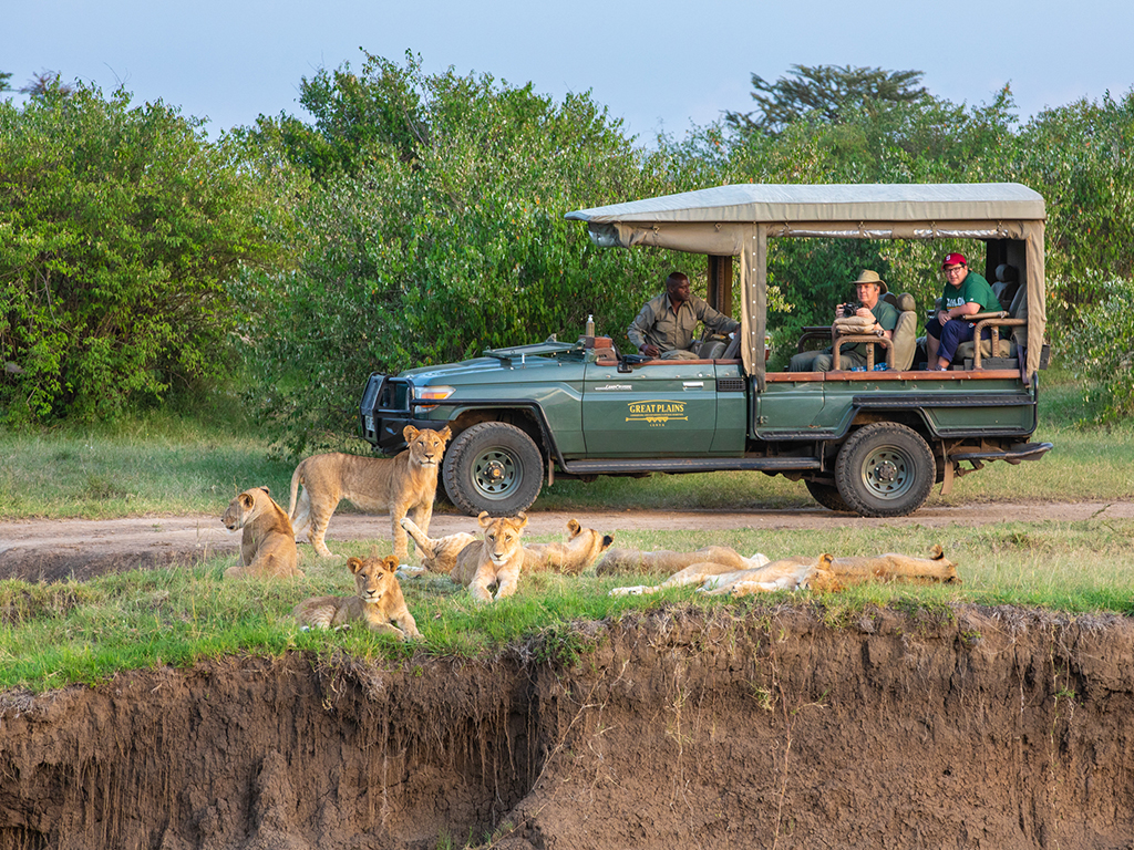 greatplains-maratoto-lion-safari